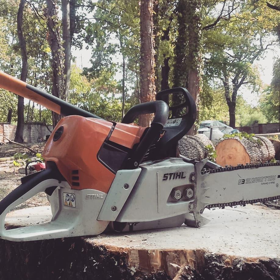 Baumschnitt, Baumpflege, Jungbaumschnitt Leipzig